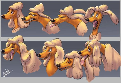Poodle_Facial Expressions by TehChan