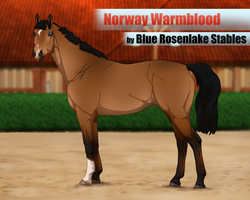 .: Norway warmblood foundation import :. | SOLD by Pashiino