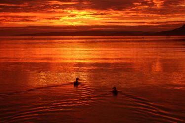 sunset with two ducks by Floriandra