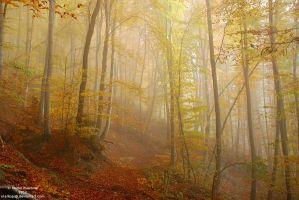 Forest in fog by markopu9