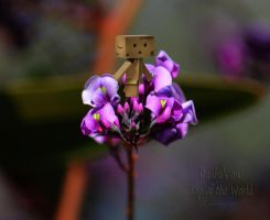 Danbo's on Top of the World by creativemikey
