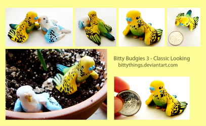 Bitty Budgies 3 - Classic Looking - SOLD by Bittythings