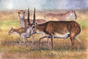 Saigas by WillemSvdMerwe