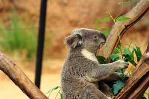 It is 5:00 somewhere and time for a Eucalyptus by Celem