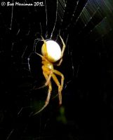 Weaver Spider by BreeSpawn