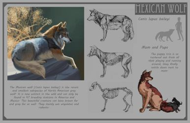 Mexican Wolf by Phee