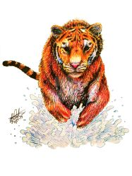 Tiger in Water by Child-of-God