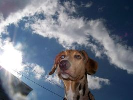head in the sky by HMJS-Photography