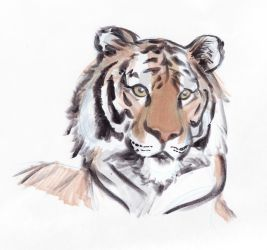 Tiger in Markers by heatherbunny