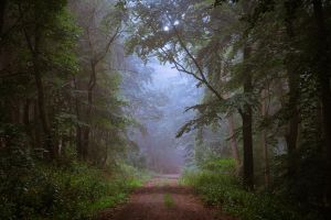 Rainforest by aw-landscapes