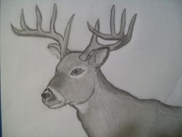 Bucky the deer by Scoobygirl17