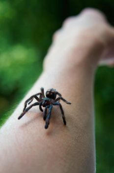 cute spiderling by dimocritus