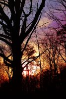 Sunset Silouette by Thy-Darkest-Hour