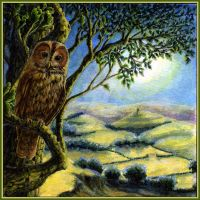 Owl Painting: The way to the Grove by CelynsCorner