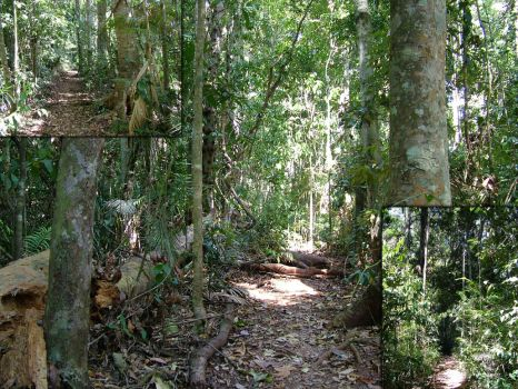 Rainforest walk, ground by Virtical