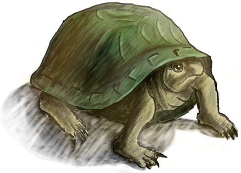 Turtle by SdZLinko