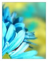 Colorful daisies 2 by sherln