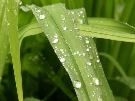 Stock Rained Grass 3 by zommy