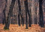 In the woods IV by MoonKey19