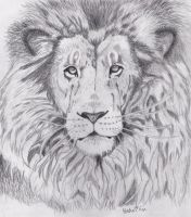 Lion pencil drawing by HedaMiu