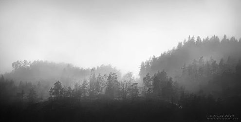 Misty Forest by Mizth