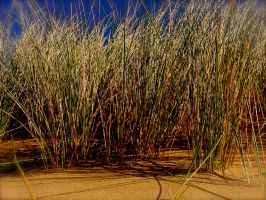Dune Grass by KateHodges