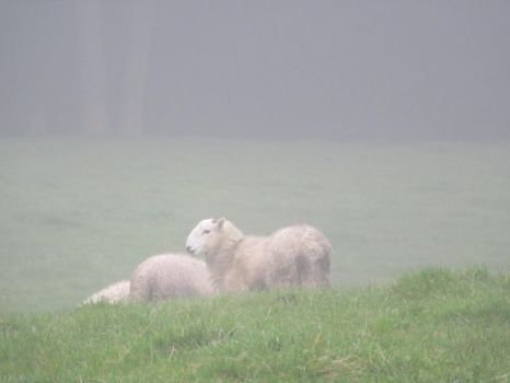Sheep In The Mist by buttercupminiatures