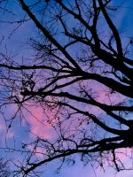 Branches at Dusk by Sagehills