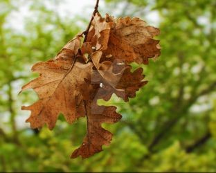 Autumn leaves by passionefoto