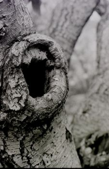 Tree Holes by lunaradiance