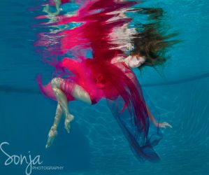 Color Explosion by SonjaPhotography