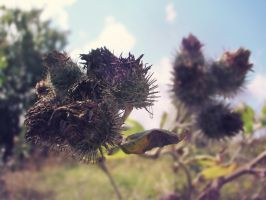 Saga of Five Little Thistles Continues by Jemany