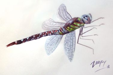 [2 euro commission] Dragonfly by l-Zoopy-l