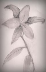 Flower Drawing by annadigiovanni