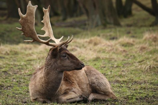 Deer Stock 26 by Malleni-Stock