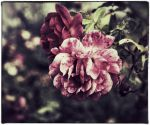 For Clara...and her Garden by MaryLugosi