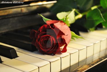 Piano N' Roses by drop-of-imagination