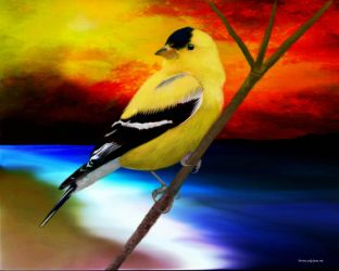 Goldfinch in color by toolyman