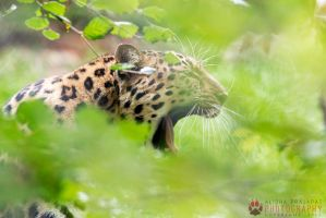 Hiding in the bushes. by Ravenith