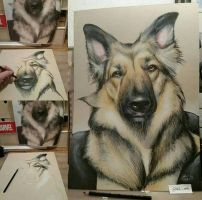 dog portrait drawing  by MiksArt