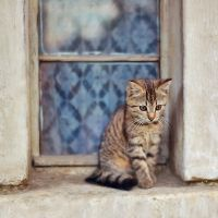 lazy cat by all17