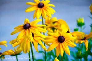 Smiling Yellow by TommyPropest-Candler