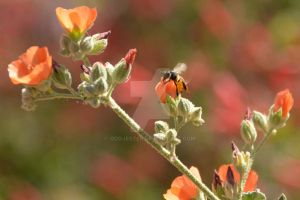 Bee in flight by oddjester