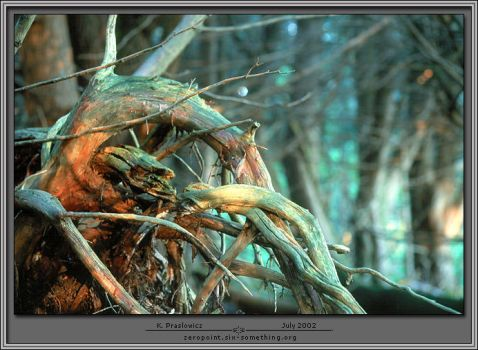 Prismatic Roots by six-something
