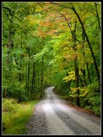 Bean Blossom road by harrietsfriend
