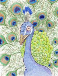 Pablo the Peacock by MonkeyFunkR