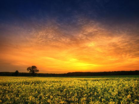 The luminous landscape pt.10. by realityDream