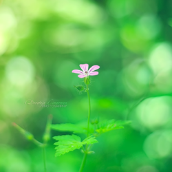Lost in Green by DorotejaC