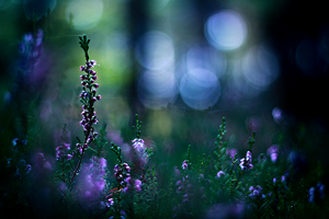 ...Fairies whispers... by Econita