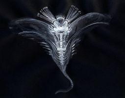 Alien X-ray creature by Zvynuota